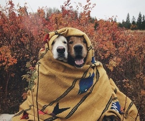 alternative, fall, and happiness image