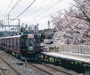 japan, train, and spring image