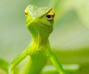 animal, cool, and gecko image