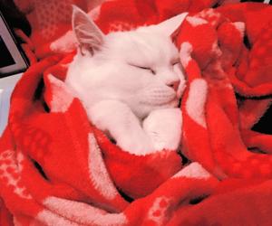 aesthetic, cat, and sleeping image