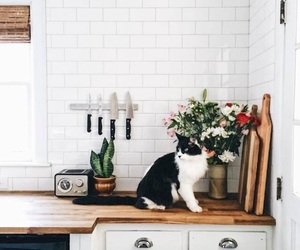 cat, photography, and home image