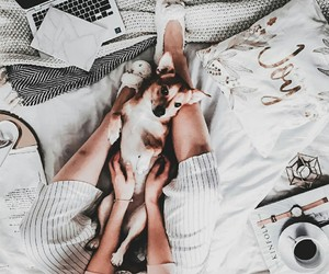 cozy, dogs, and style image
