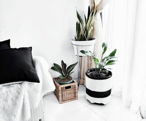 interior, plants, and home image