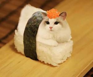 kitty and sushi image