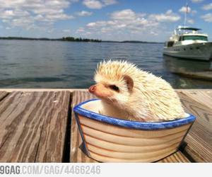 hedgehog, boat, and funny image