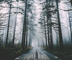 forest, holiday, and nature image