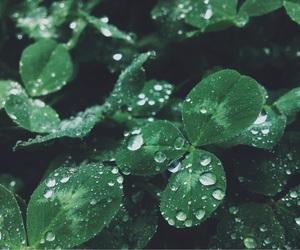 dark, rain, and green image