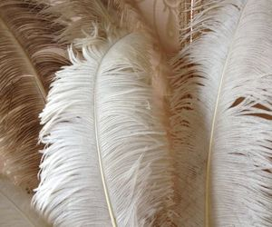 brown, cream, and feathers image