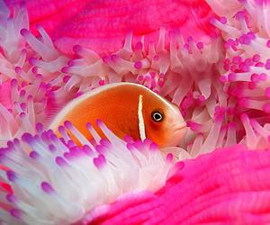 fish and pink image