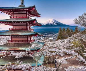 aesthetics, cherry blossoms, and japan image