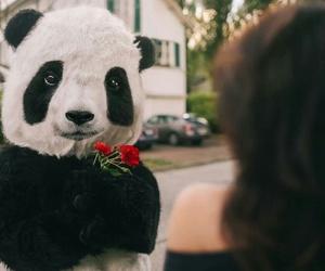 panda and flowers image