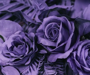 pantone, roses, and ultra violet image