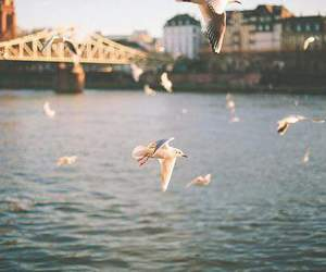 bird, sea, and water image