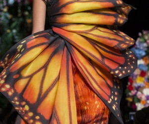 butterfly, chic, and Couture image
