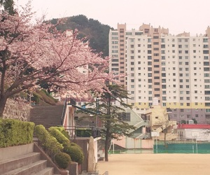 apartment, asia, and cherry blossom image