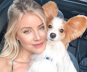 animal, blonde, and dog image