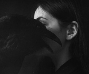 dark, black, and raven image