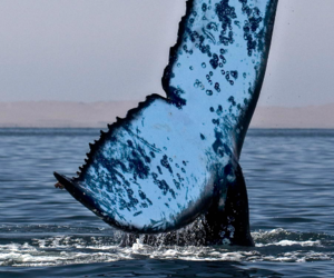 whale, animal, and nature image