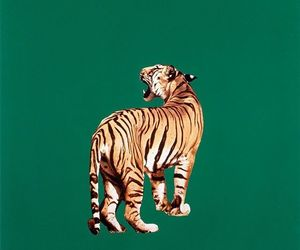 tiger, green, and animal image