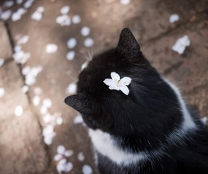 adorable, cat, and flowers image