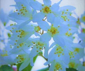 blue, flowers, and babyblue image