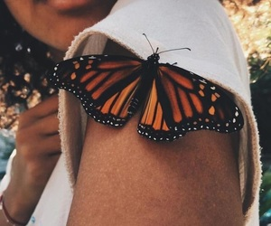 butterfly, photography, and animal image