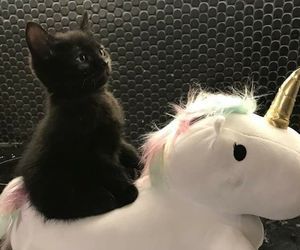 unicorn, cat, and kitty image