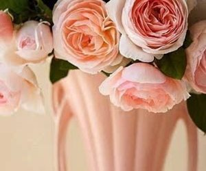 flowers, peach, and pink image