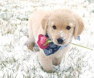 baby animals, cute animals, and winter image