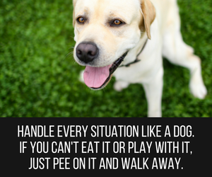 dog, funny quotes, and quote image