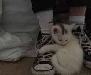 cat and dark image