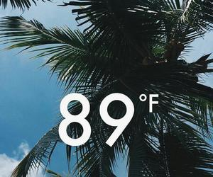 background, green, and palms image