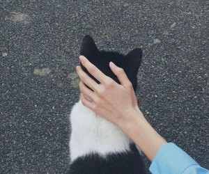 cat, hand, and tumblr image