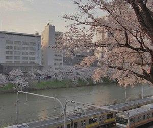 aesthetic, sakura, and pink image