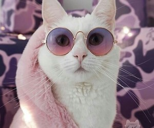aesthetic, alternative, and cat lover image