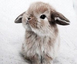 bunny, cute, and easter image