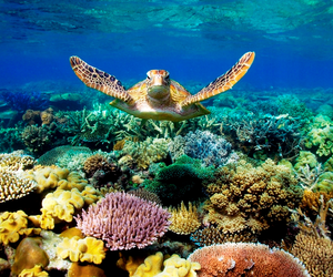australia and the great barrier reef image