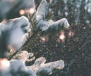 christmas tree, nature, and snow image