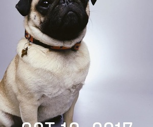 cache, dog, and pug image
