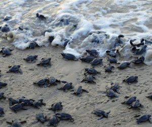 baby, hatching, and turtles image
