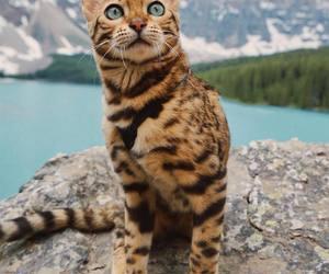 cat, kitten, and the.pinklemonade image