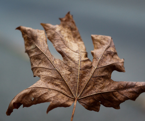 autumn, brown, and fall image