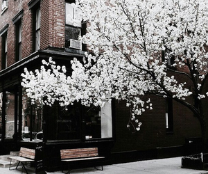 tree, flowers, and white image