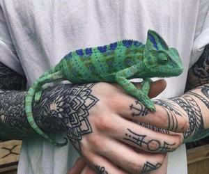 tattoo, animal, and chameleon image