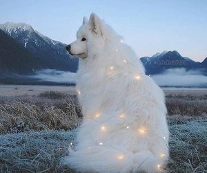 dog, star, and Dream image