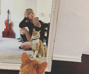 cat, kitty, and carly rae jepsen image
