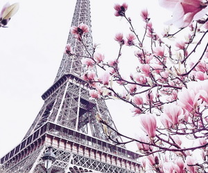 travel, paris, and flowers image