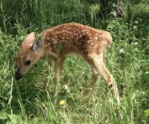 beige, deer, and flowers image
