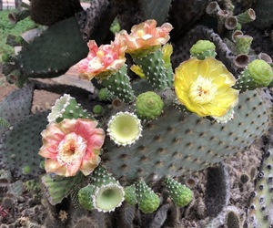 cactus, green, and spring image