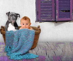 animals, baby, and basket image
